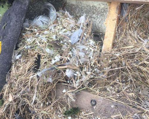 vogeloverlast-dakonderhoud